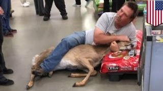 Customer tackles deer in Minnesota Walmart pet aisle - TomoNews