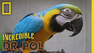 Dr. Pol Meets a Nice Bird | The Incredible Dr. Pol by Nat Geo WILD