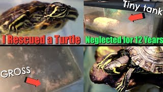 I Rescued a Turtle That was Neglected for Over 12 Years by Tyler Rugge