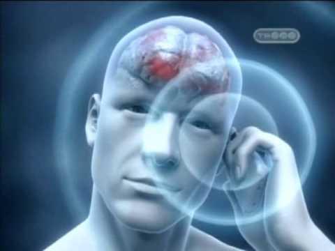 Влияние косметики на здоровье человека реферат смотрите онлайн  Вред от сотового телефона