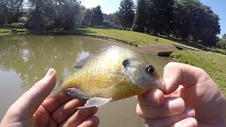 """Whats up  everyone just Got Back from a Family vacation and I decide to do some monster pan fishing!!! Check it out!!!!! Thanks for the support everyone!!!!!!!MUSIC- Spike vibes https://www.youtube.com/channel/UCLY3kskbNAeDl3utrSfccJA/videosLURES I USEStorm Live kicking Minnow-https://goo.gl/CbMb6MMatzuo Ikari lipless crankbait- https://goo.gl/RBPTdyStorm 3"""" Wildeye Bluegill-https://goo.gl/APLKxCDUCK LURE-https://goo.gl/jMYCz1SUNFISH LURE-https://goo.gl/GhTpRcDOUBLE PLOPPER- https://goo.gl/lVmOaUROD AND REELSMACH 1 Speed Spool Combo- https://goo.gl/ibmLGlMACH 2 REEL- https://goo.gl/th3A2yGhost Ducket rod- https://goo.gl/G0upkPUgly Stick Combo- https://goo.gl/1kLk7mCamera GearGo Pro Hero 5- https://goo.gl/eUnDgcCannon 70 D with lens- https://goo.gl/hxAeuu*above are amazon associate links*"""