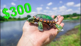 Video $300 TURTLE LURE May be The Craziest Lure Ever Made! (Here's Why) MP3, 3GP, MP4, WEBM, AVI, FLV Agustus 2018