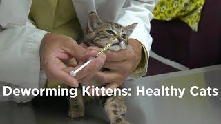 De-worming Kittens: Healthy Cats