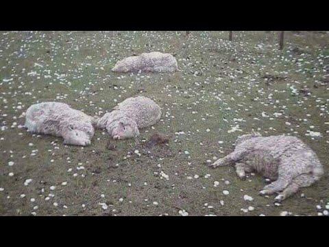 В Кабардино-Балкарии выпал град размером с куриное яйцо