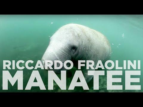 Riccardo Fraolini -  The Manatee