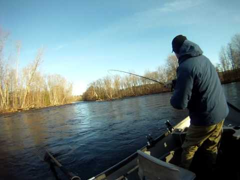 Billy battles a mean steelhead