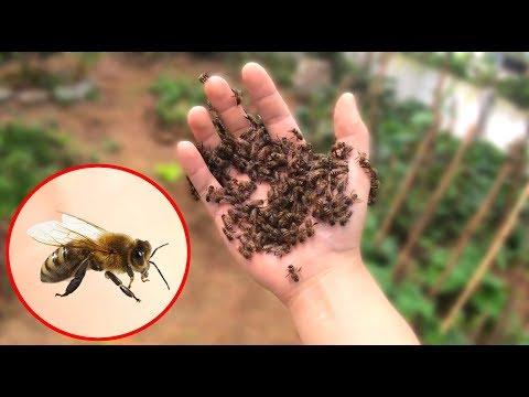 NTN - Thử Thách Bắt Ong Tay Không (Catching bees by hand challenge) - Thời lượng: 13 phút.