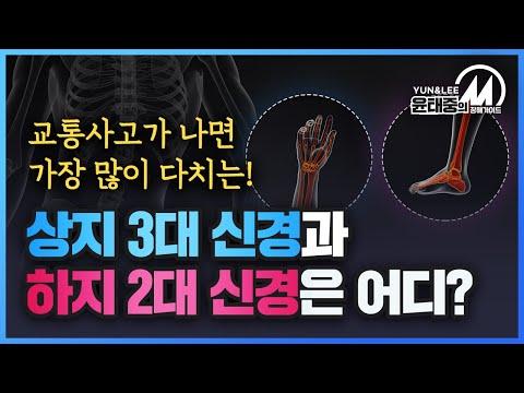 [윤태중의 M 장해 가이드] 척수신경과 신경이 다쳤을 때 후유증