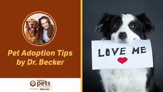 Pet Adoption Tips By Dr. Becker