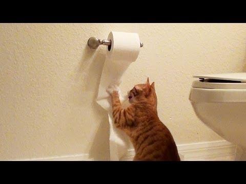 Así se hace el papel higiénico