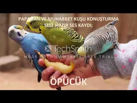 Video Papağan ve Muhabbet Kuşu Konuşturma ÖPÜCÜK Sesi hazır ses kaydı 1 saat download in MP3, 3GP, MP4, WEBM, AVI, FLV January 2017