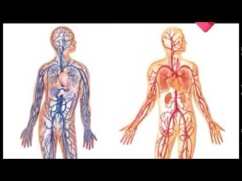 Раскрывая тайны. Здоровье - (Сердце) (Документальные фильмы) (видео)