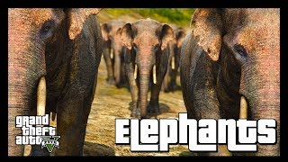 GTA 5 Wildlife Documentary  ElephantsIn this latest edition of the GTA 5 Wildlife Documentary series, we shall be observing the secret and compassionate lives of the biggest animals to roam the lands of GTA 5.» Don't forget to like the video and subscribe to the channel for more ridiculous videos like the one you've just seen.» Support me by becoming an 8-Bit Bastard Patreon, you'll gain access to exclusive content! https://www.patreon.com/8BitBastardStay Connected!• Twitter: https://twitter.com/8Bit_Bastard• Patreon: https://www.patreon.com/8BitBastard• Facebook: https://www.facebook.com/8BitBastard/
