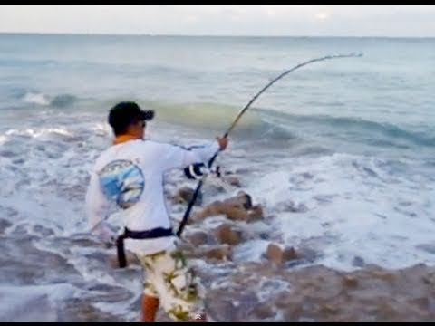 BIG GAME FISHING - Video of Jimmy & Jimmy Big Game Fishing for Sharks from Shore. Visit our website: http://blacktiphfishing.org/ SPONSORS: http://barrettrods.com/