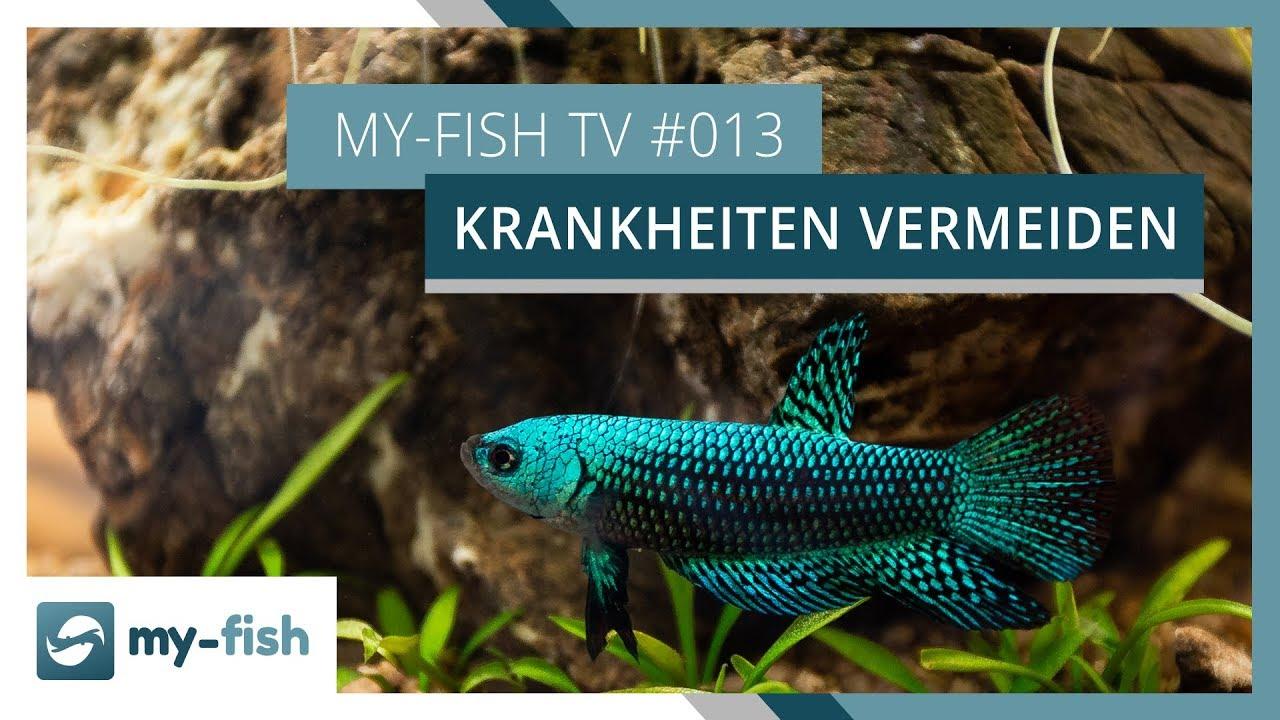 my-fish TV - Deine Nr. 1 Anlaufstelle für alle Themen rund um die Aquaristik 51