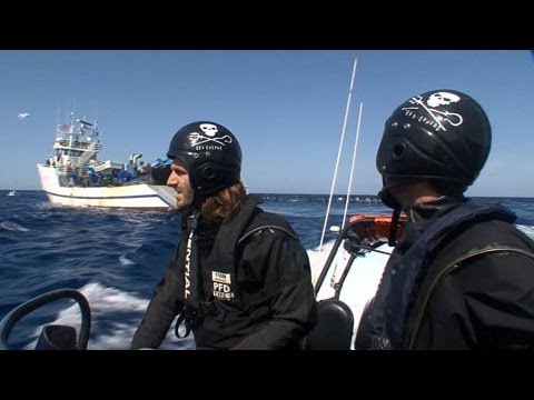 Tuna Battle off the Barbary Coast