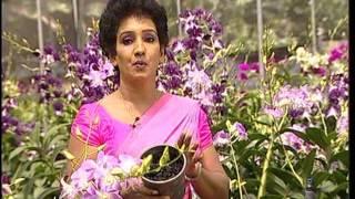 Orchid in sri lanka