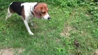 Hero Dog Saves Baby Bunny!!!!