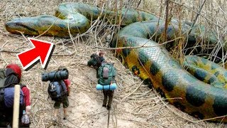 HUGE SNAKES AND ALLIGATORS MEET THE BOY SCOUTS!! Brian Barczyk by Brian Barczyk