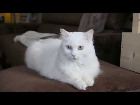 Cute and Funny Cat Videos to Keep You Smiling! 🐱