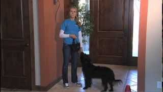 Curb Barking in the Home