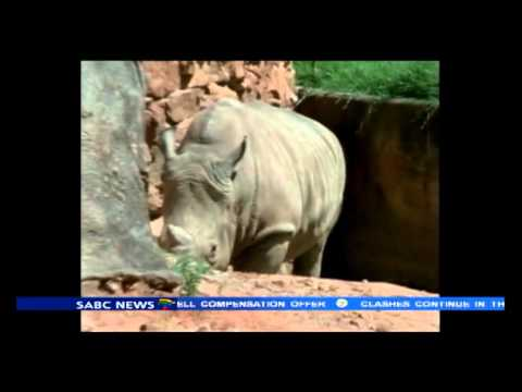 Fifth rhino killed at Pretoria Lodge
