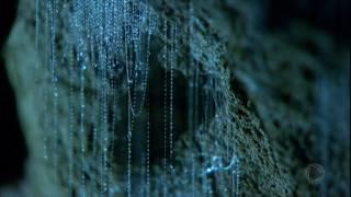 Nas profundezas de uma das cavernas neozelandesas acontece um fenômeno raríssimo no mundo, protagonizado pelas larvas que brilham no escuro subterrâneo chamadas glow worms.
