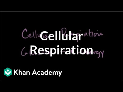 Cellular Respiration Introduction Biology Video Khan
