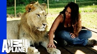 Download Youtube: Lions Treat Woman Like the Leader of the Pride