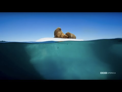 Planet Earth: Blue Planet II