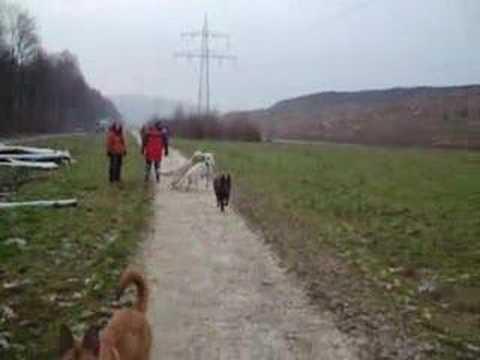 Lixon.de – Hundefilm 05
