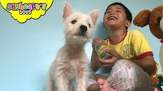 Skyheart got a special surprise - and it's a real puppy! We gave our toddler a West Highland Terrier and it's making our world  really crazy and fun! We played with Owie and Skyheart, toys like the little live pets singing dogs, scorpion, squishy toys, a singing beagle on a leash and other stuffs in our house. He chased us all over the house and our kids love this 2 month old, white puppy![CLICK HERE] Subscribe to our channel for more fun and toyshttp://youtube.com/c/SkyheartsToysChannel?sub_confirmation=1