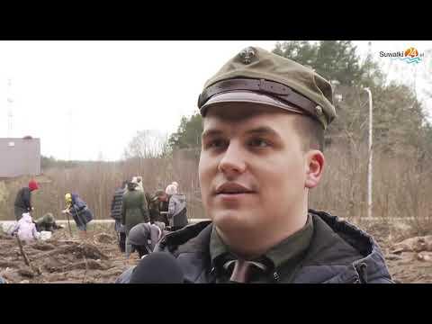 Suwalscy harcerze sadzili las