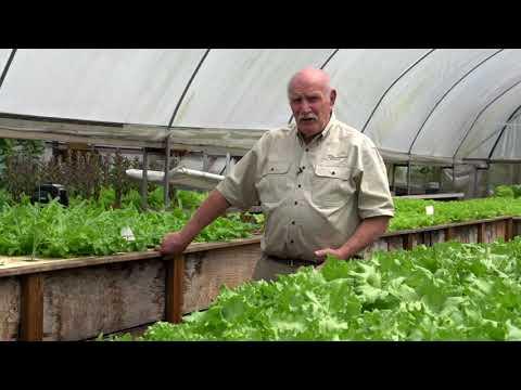 Aquaponics Plant Nutrition Story