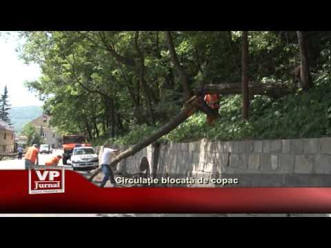 Circulatie blocata de copac