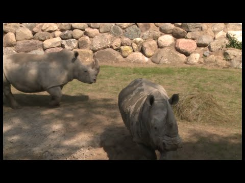 Schwerin: 60 Jahre Schweriner Zoo - viele große Bau ...