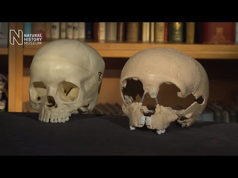 How the Neanderthals got their big noses