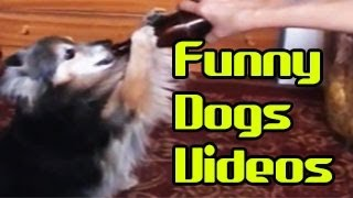 Funny Animals Videos - Funny Dogs Compilations: Best of this Month