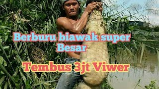 Video Berburu biawak super besar (tanpa alat apa pun) MP3, 3GP, MP4, WEBM, AVI, FLV September 2018