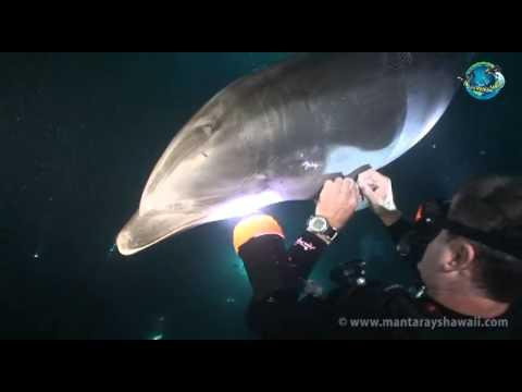 潛水員原以為海豚想和他們玩 靠近一看居然是來發出求救訊息
