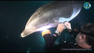 「ちょっと助けて!」ダイバーに近づいてきたイルカのお願い事とは?