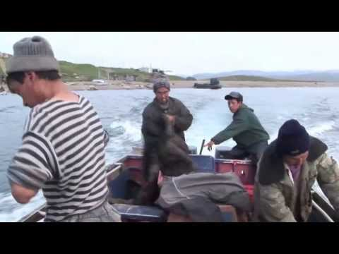 документальные фильмы ловля китов