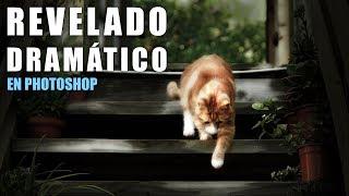 """A petición de uno de vosotros os muestro cómo conseguir este fantástico efecto con el que vamos a conseguir darle dramatismo a nuestras fotografías.♦︎ ENLACE A FOTOGRAFÍA PARA SEGUIR EL TUTORIAL- Fotografía de pixabay.com: https://goo.gl/u9vBoe♦︎ TUTORIALES RELACIONADOS- Mejorar, texturizar e iluminar un bodegón con Photoshop: https://youtu.be/A-HgK8TCWs0— Cómo crear el efecto Clave Baja o """"Low Key"""" con Photoshop: https://youtu.be/s5u3SnOzfPQ♦︎ Recursos gratuitos en: https://goo.gl/gxH0qs♦︎ Técnicas usadas:- Ajustes de color.- Viñeteado.- Filtro Resplandor Difuso.- Desenfoque selectivo.- Máscaras de capa.Partiendo de una fotografía con una iluminación equilibrada llegaré hasta una fotografía con poca exposición, resaltando los elementos principales gracias a los ajustes que iré haciendo durante todo el tutorial.♦︎ Más tutoriales escritos en: https://www.tripiyon.com♦︎ Instructor Certificado en ConectaTutoriales (Photoshop) - Grupo oficial de Adobe en España: http://adobe.conectatutoriales.com"""