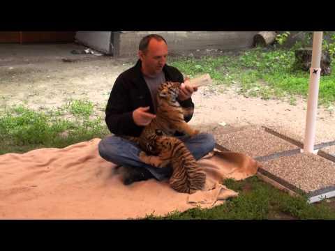 Zoo Abony 2012