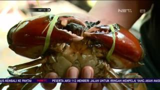 Video Serunya Wisata Mangrove dan Budidaya Kepiting di Wanasari Tuban - NET12 MP3, 3GP, MP4, WEBM, AVI, FLV April 2019