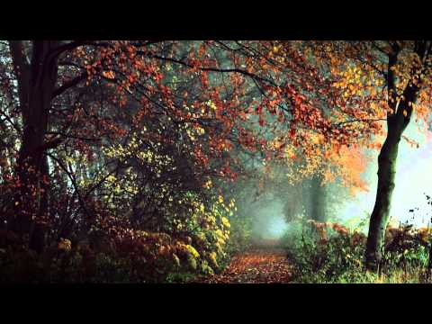 Autumn's Kingdom - November Remembrances