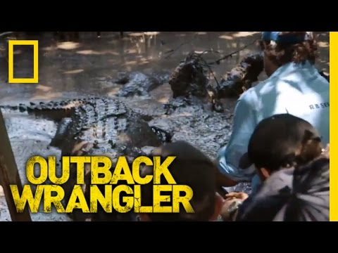 Croc Tug of War   Outback Wrangler