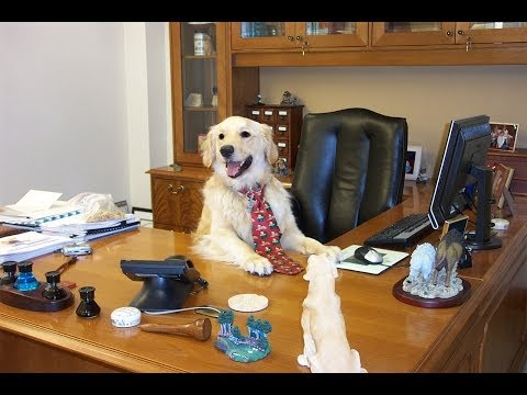 12 reasons why you should bring your dog to work