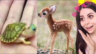 Video Cute BABY ANIMAL Moments Video Compilation MP3, 3GP, MP4, WEBM, AVI, FLV September 2019