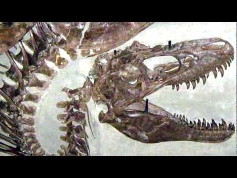Death Throes — Dinosaur fossil posture suggests asphyxiation